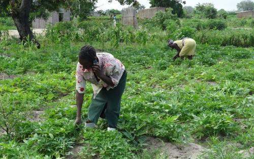Kvinder på markarbejde. Med mobil.